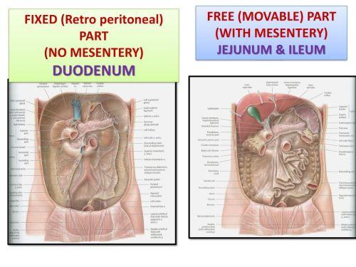 small resolution of fixed retro peritoneal part