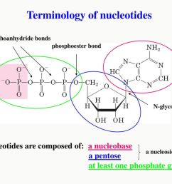 terminology of nucleotides [ 1024 x 768 Pixel ]