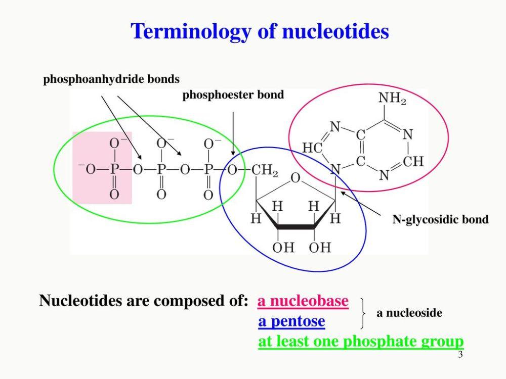 medium resolution of terminology of nucleotides