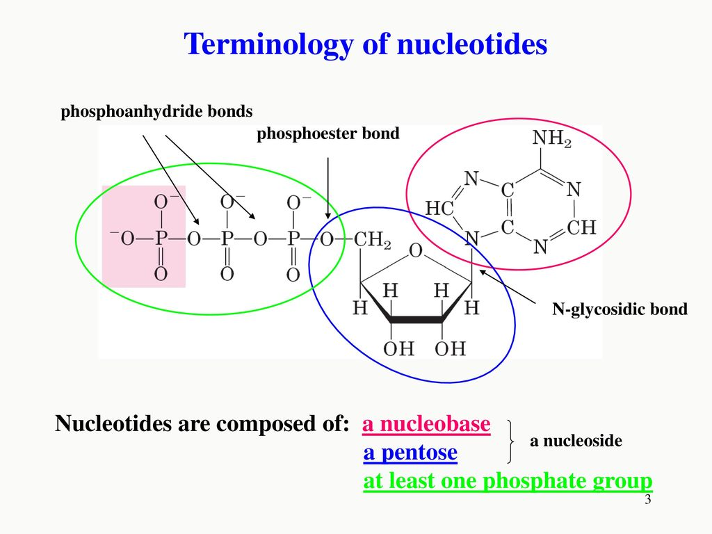 hight resolution of terminology of nucleotides