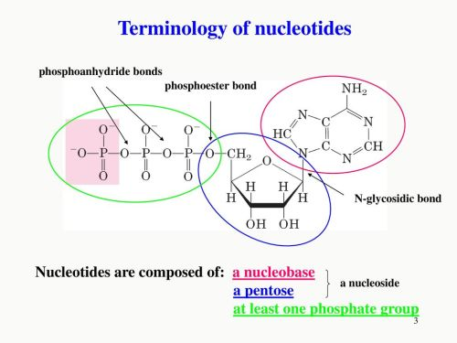 small resolution of terminology of nucleotides