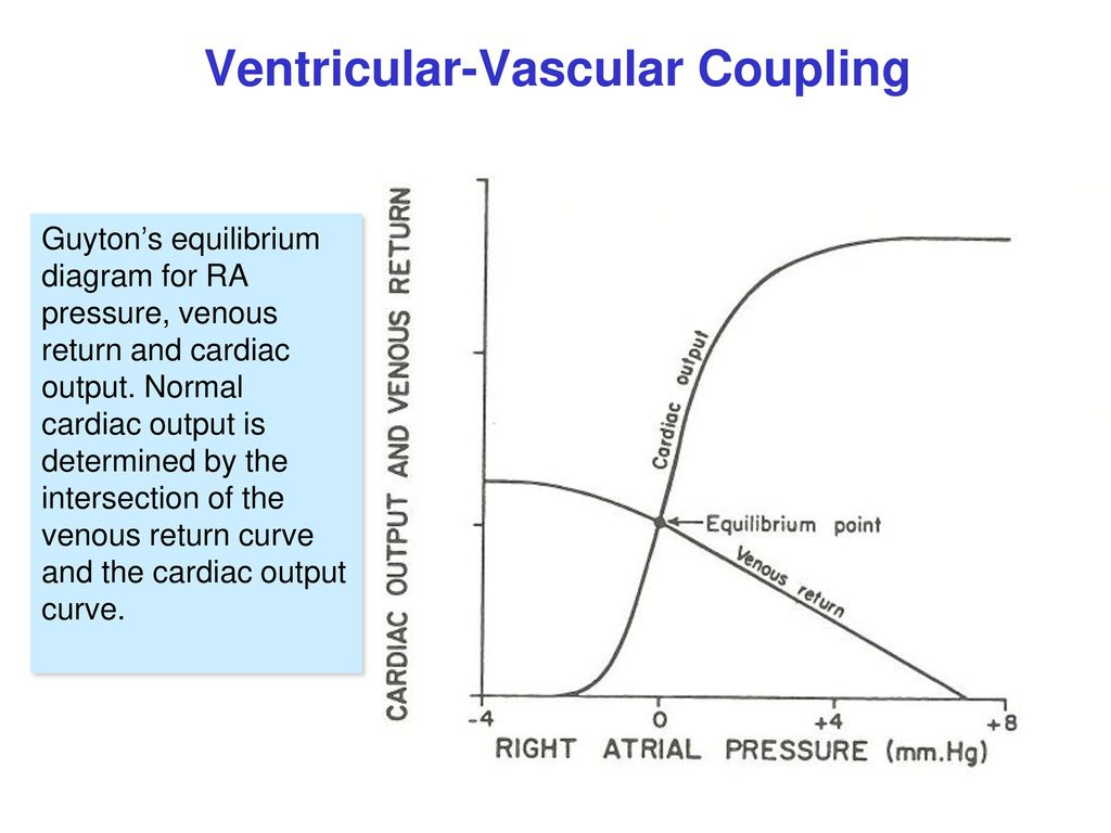 hight resolution of 19 ventricular vascular coupling