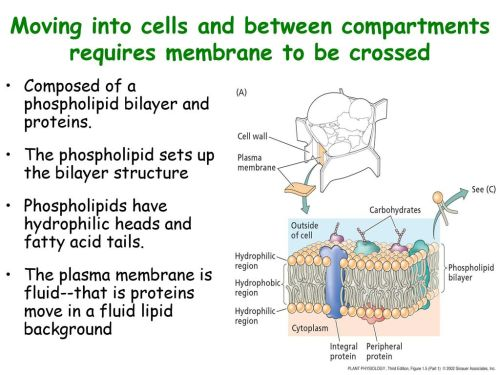 small resolution of moving into cells and between compartments requires membrane to be crossed
