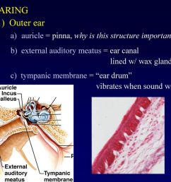 a auricle pinna why is this structure important [ 1024 x 768 Pixel ]
