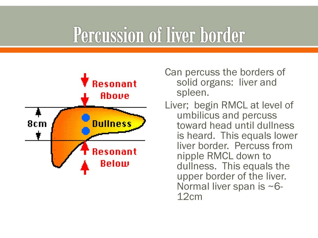 hight resolution of percussion of liver border