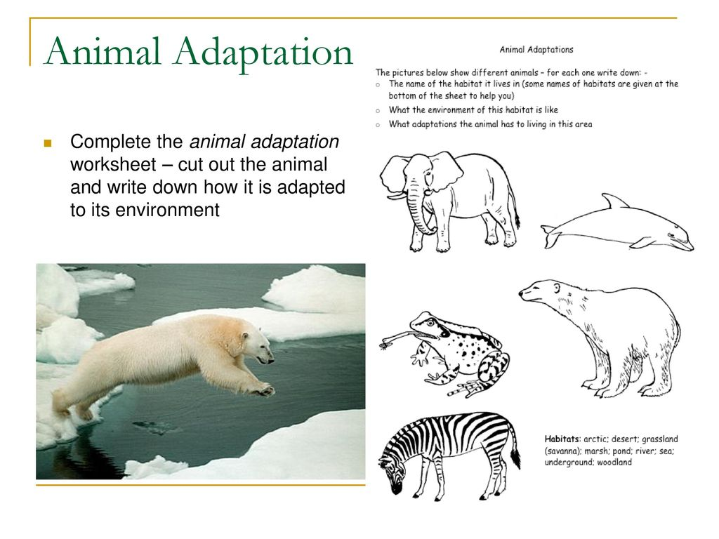 Adaptations Noadswood Science Ppt Download