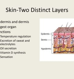 10 skin two distinct layers [ 1024 x 768 Pixel ]