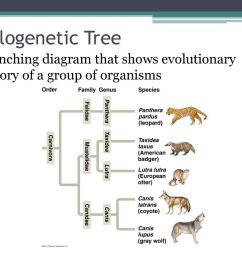 6 phylogenetic tree branching diagram that shows evolutionary history of a group of organisms [ 1024 x 768 Pixel ]