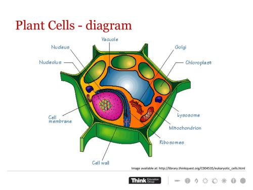small resolution of plant cells diagram work through worksheet complete concept test