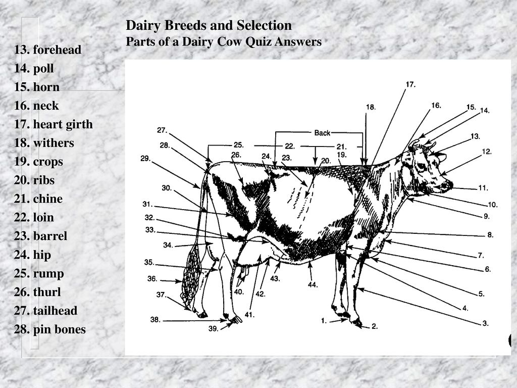 dairy cow parts diagram hager single phase contactor wiring best library