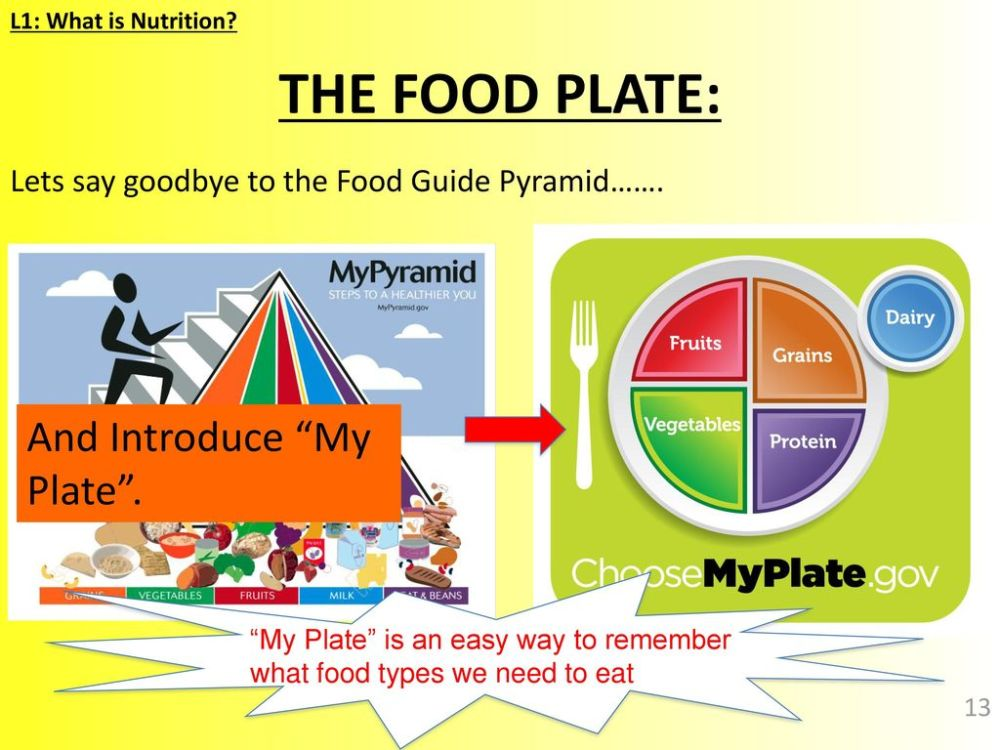medium resolution of the food plate and introduce my plate