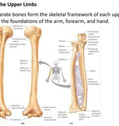 7 bones of the upper limbs [ 1024 x 768 Pixel ]