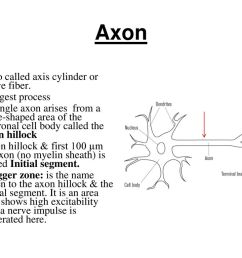 axon also called axis cylinder or nerve fiber longest process [ 1024 x 768 Pixel ]