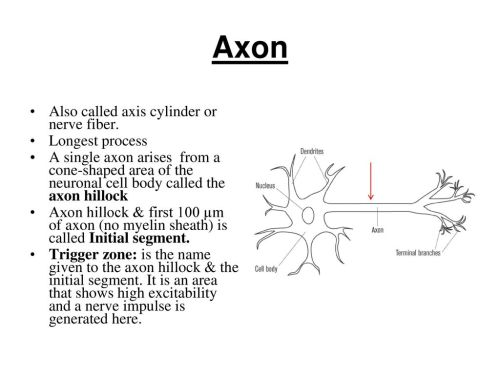 small resolution of axon also called axis cylinder or nerve fiber longest process