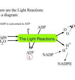 here are the light reactions as a diagram  [ 1024 x 768 Pixel ]