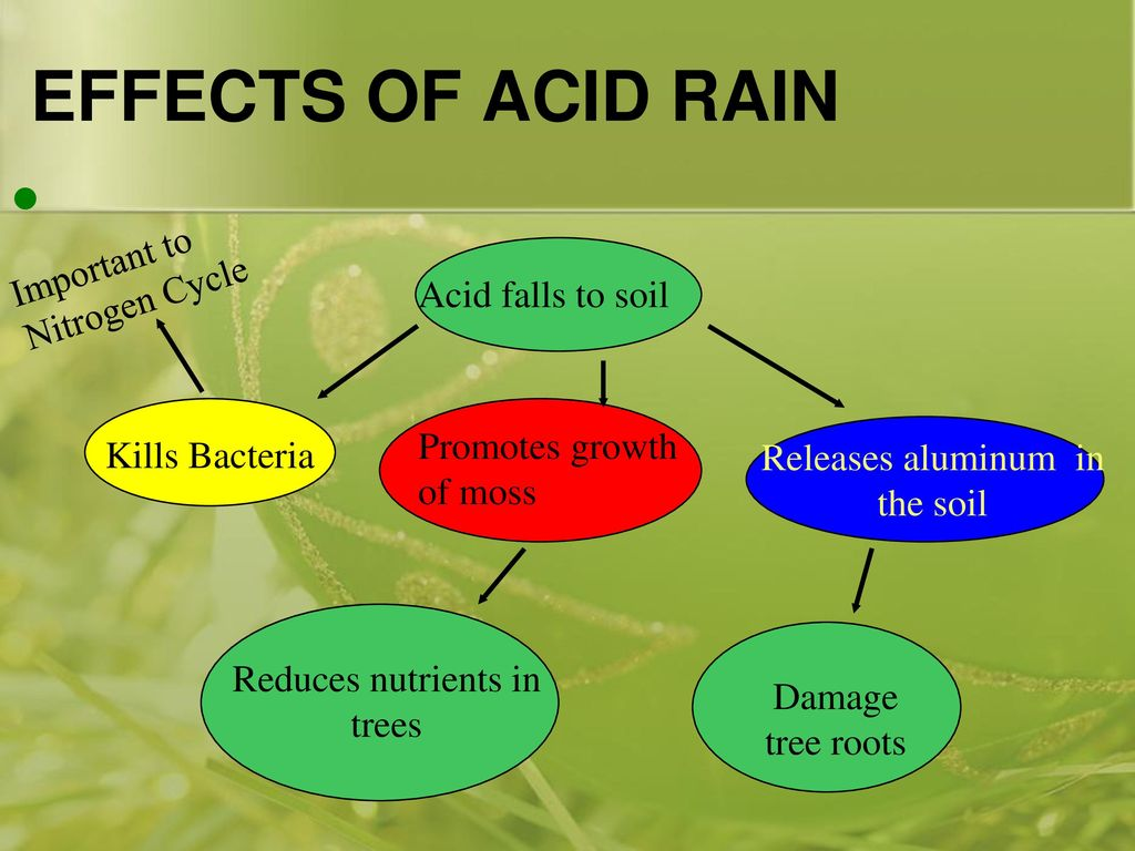 hight resolution of effects of acid rain important to nitrogen cycle acid falls to soil