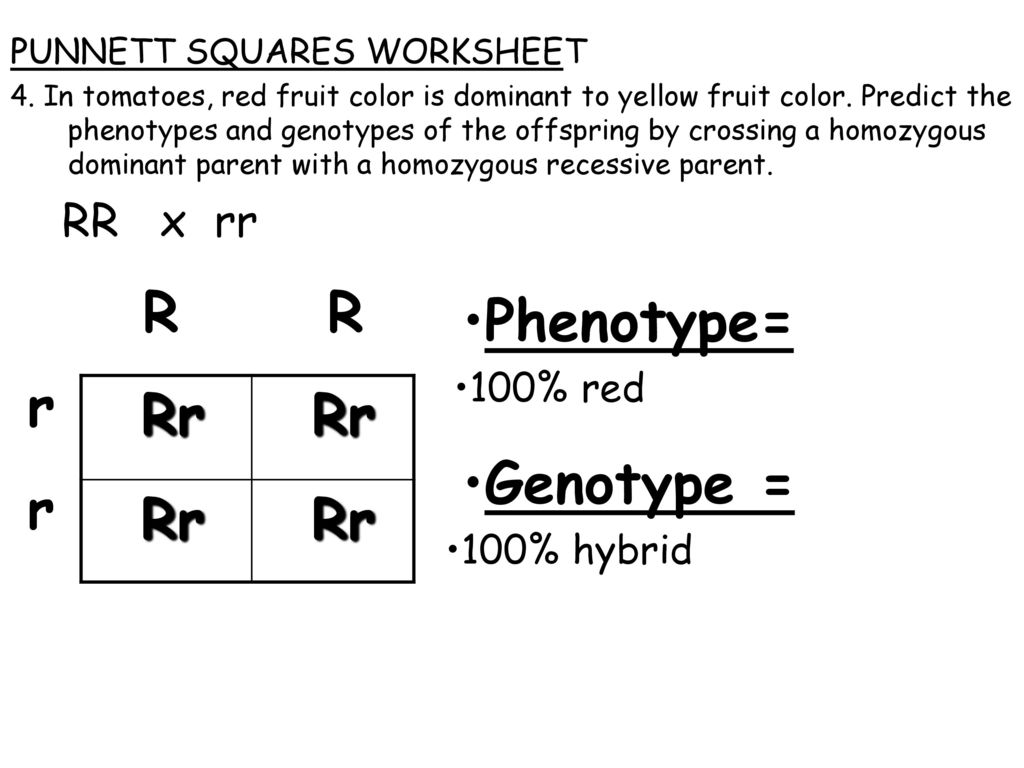 Topic Genetics Aim What Are Punnett Squares