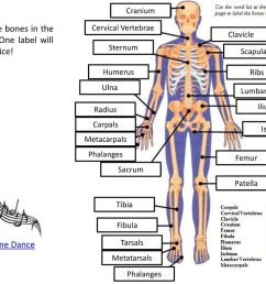 identify the bones in the skeleton one label will be used twice  [ 1024 x 768 Pixel ]