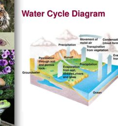 water cycle diagram percolation in [ 1024 x 768 Pixel ]