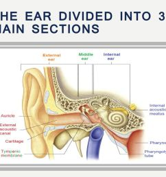 ear anatomy and physiology 2 the  [ 1024 x 768 Pixel ]