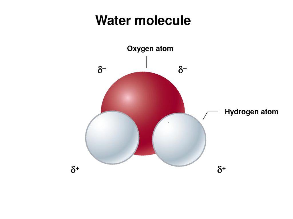 hight resolution of 32 water molecule oxygen atom hydrogen atom