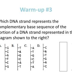 9 warm up 3 which dna strand represents the complementary base  [ 1024 x 768 Pixel ]