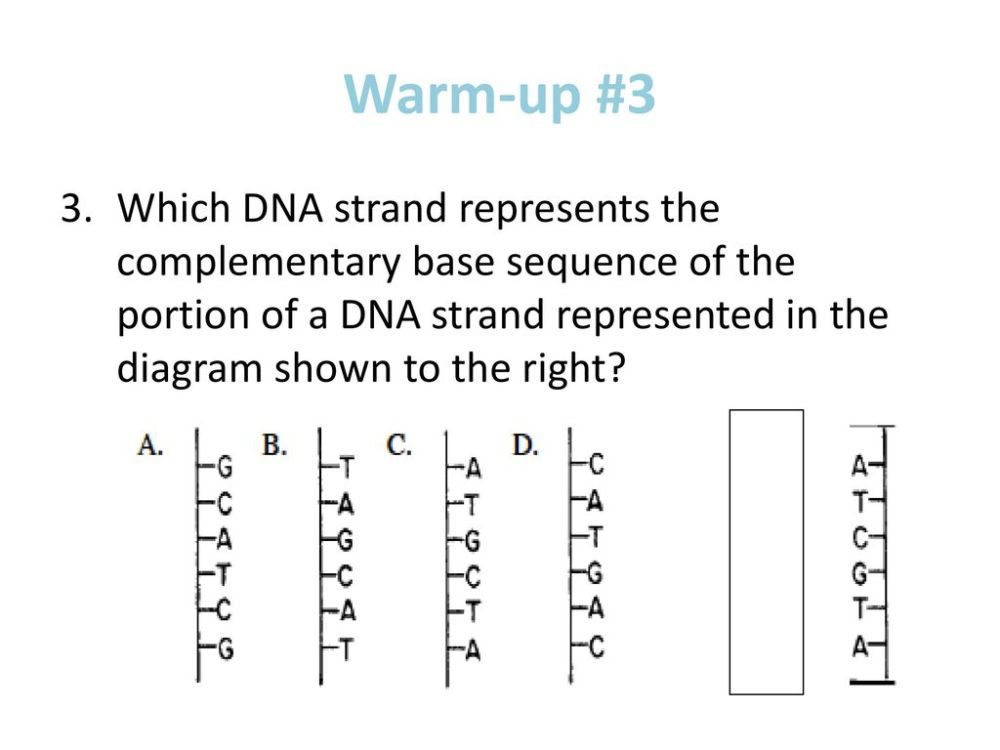 medium resolution of 9 warm up 3 which dna strand represents the complementary base