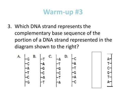 small resolution of 9 warm up 3 which dna strand represents the complementary base