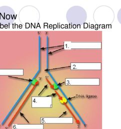 69 do now label the dna replication diagram [ 1024 x 768 Pixel ]