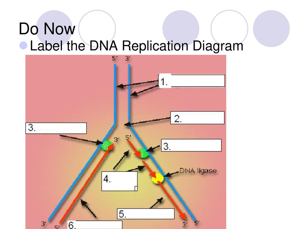 hight resolution of 69 do now label the dna replication diagram