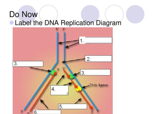 small resolution of 69 do now label the dna replication diagram