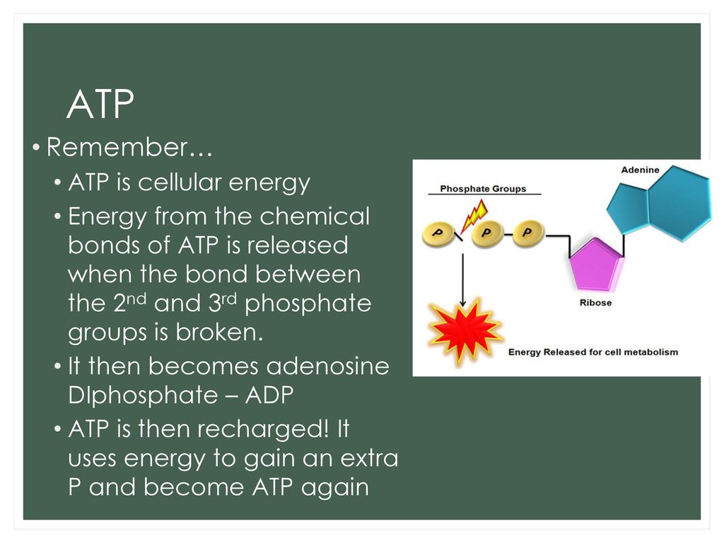 Chemosynthesis The Process Of Recharging Atp Via Proton