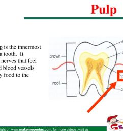 pulp the pulp is the innermost layer of a tooth  [ 1024 x 768 Pixel ]