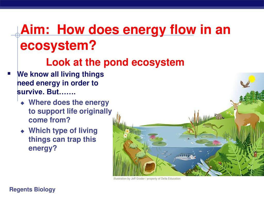 Energy Flow In Pond Ecosystem