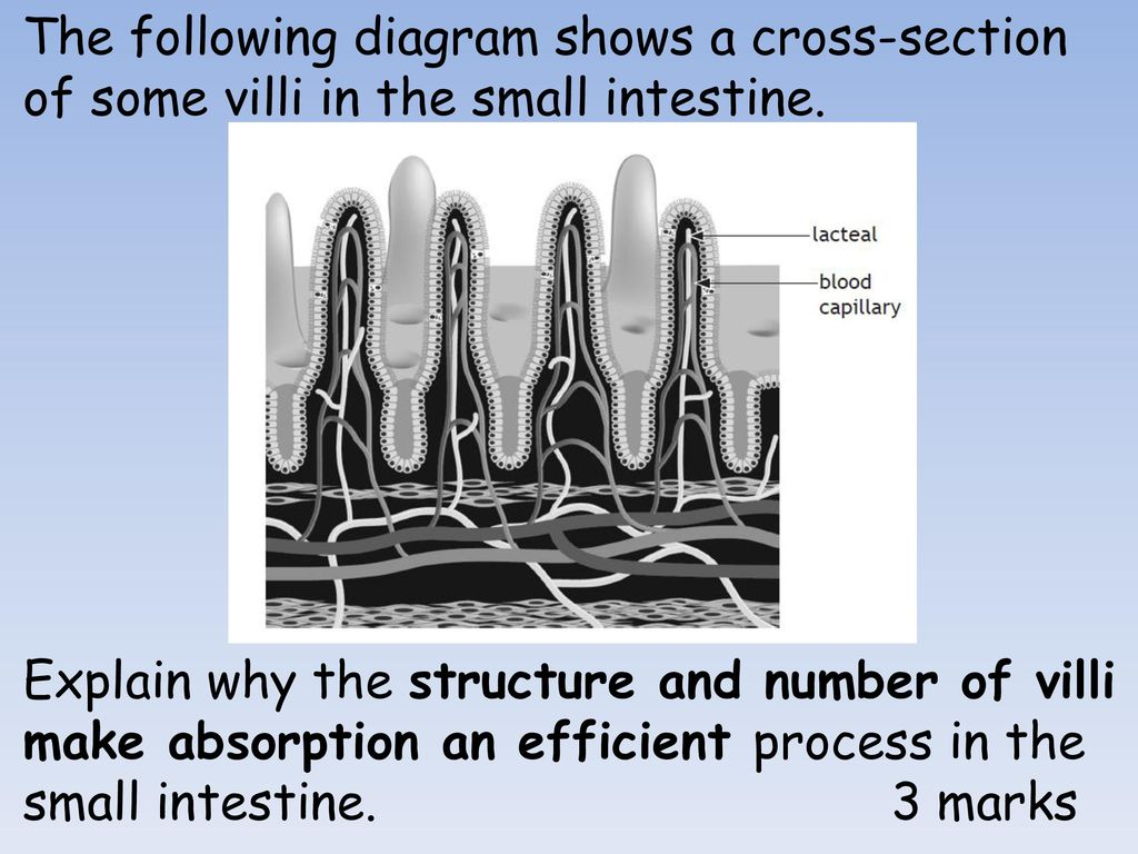 hight resolution of the following diagram shows a cross section of some villi in the small intestine