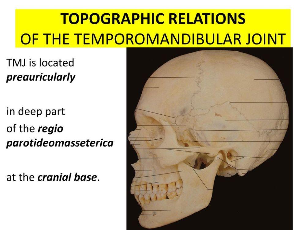 medium resolution of topographic relations of the temporomandibular joint