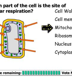 which part of the cell is the site of cellular respiration [ 1024 x 768 Pixel ]