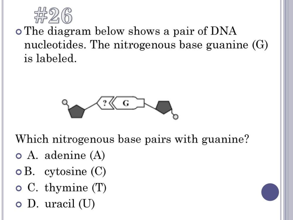 medium resolution of  26 the diagram below shows a pair of dna nucleotides the nitrogenous base guanine