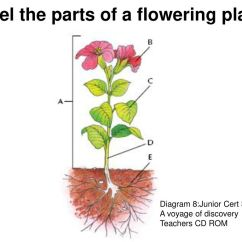 Diagram Of A Flowering Plant With Label Land Rover Discovery Radio Wiring Topic Structure Section 1c Animals Plants Micro Organisms The Parts
