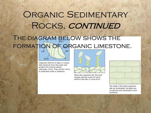 small resolution of organic sedimentary rocks continued