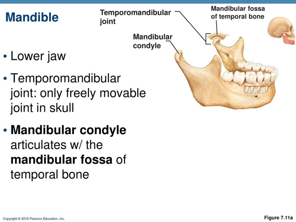 medium resolution of 63 temporomandibular joint
