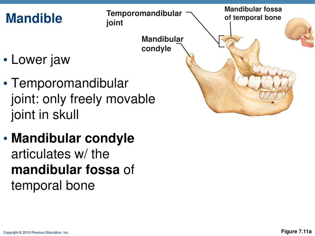 hight resolution of 63 temporomandibular joint