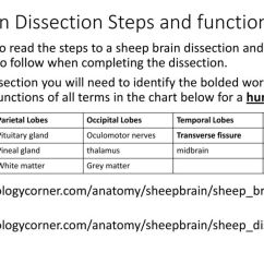 Sheep Brain Diagram Biology Corner H6024 Headlight Wiring Homework Over Christmas Break Ppt Download 3