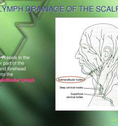 lymph drainage of the scalp [ 1024 x 768 Pixel ]