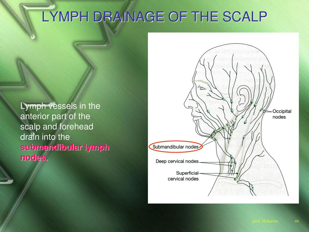 hight resolution of lymph drainage of the scalp