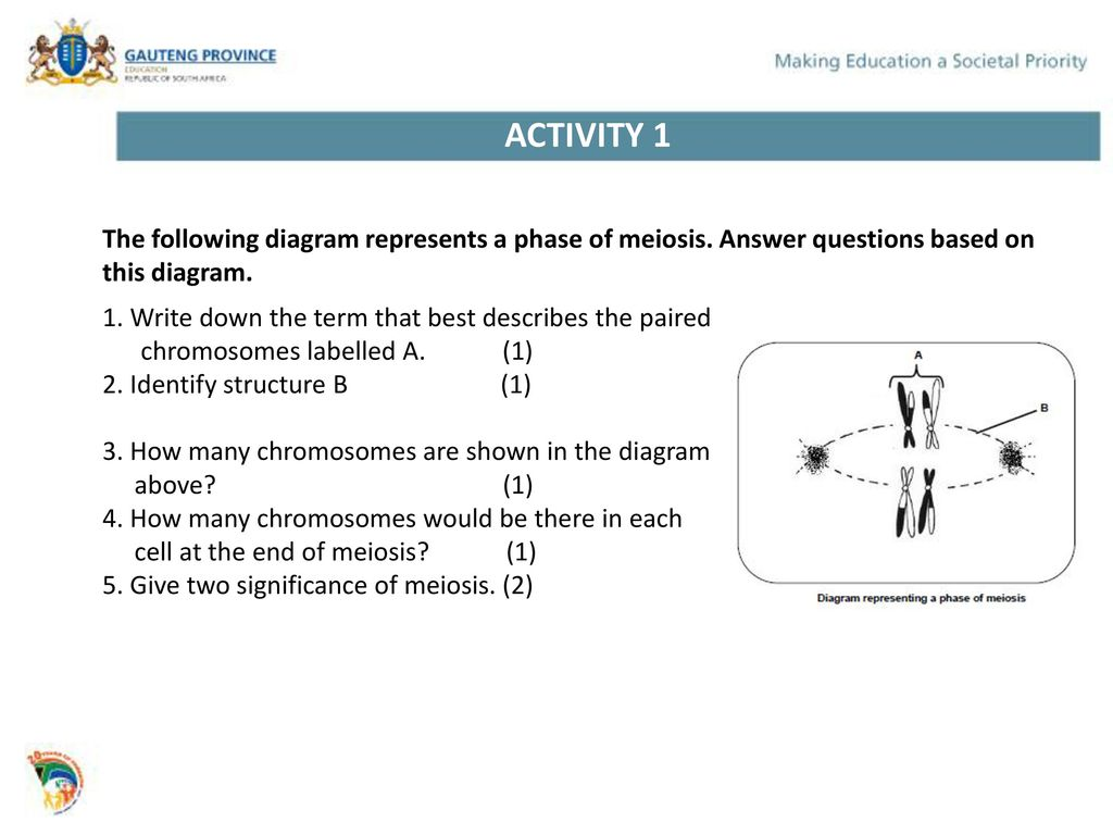 hight resolution of activity 1 the following diagram represents a phase of meiosis answer questions based on this