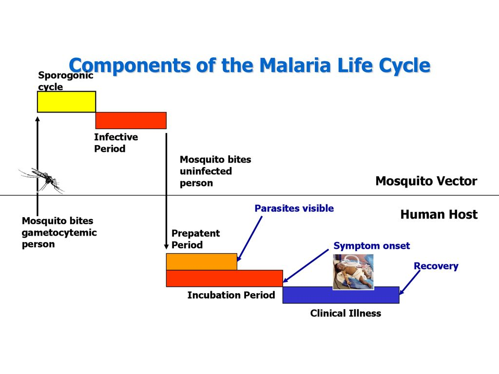 hight resolution of components of the malaria life cycle