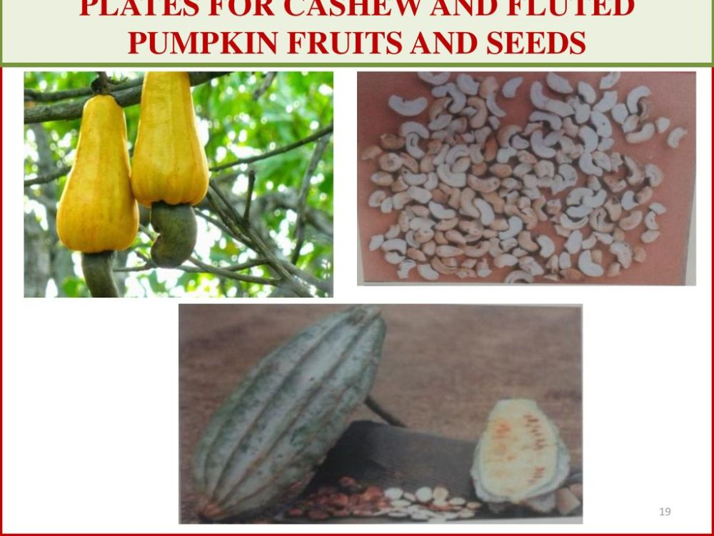 medium resolution of 19 plates for cashew and fluted pumpkin fruits and seeds