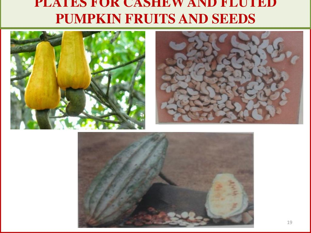 hight resolution of 19 plates for cashew and fluted pumpkin fruits and seeds