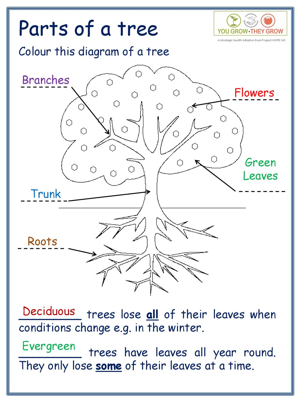 hight resolution of parts of a tree colour this diagram of a tree branches flowers